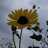 Gardening 2013 - 115_7245.JPG