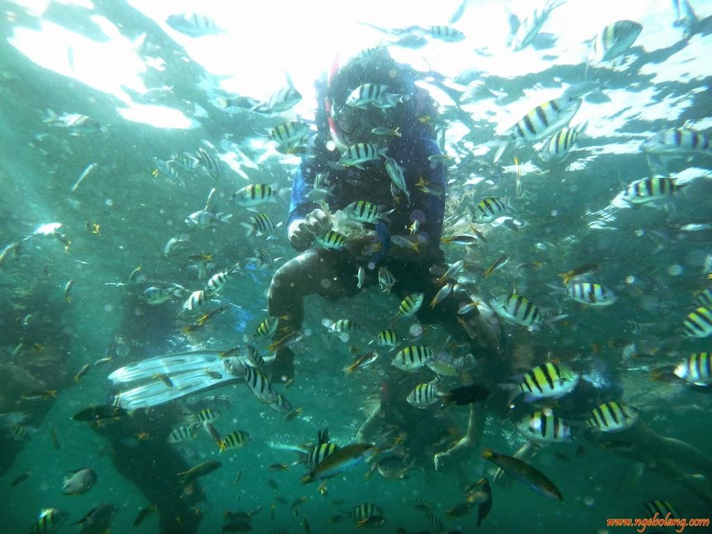 ngebolang-pulau-harapan-16-17-nov-2013-wa-23