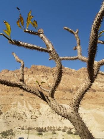 Israël côté désert