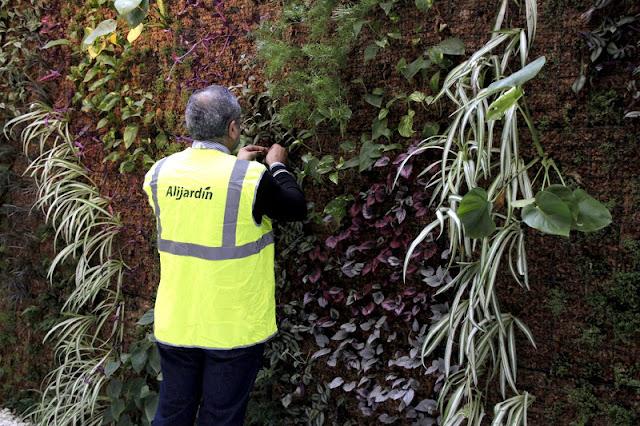 Mantenimiento de jardines verticales urbanarbolismo for Mantenimiento de jardines
