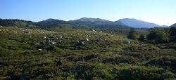 Bloc de Granite déposé par l'ancien Glacier sur le Plateau du Coscione