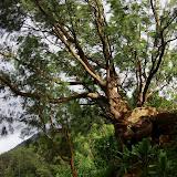 06-18-13 Waikiki, Coconut Island, Kaneohe Bay - IMGP6973.JPG
