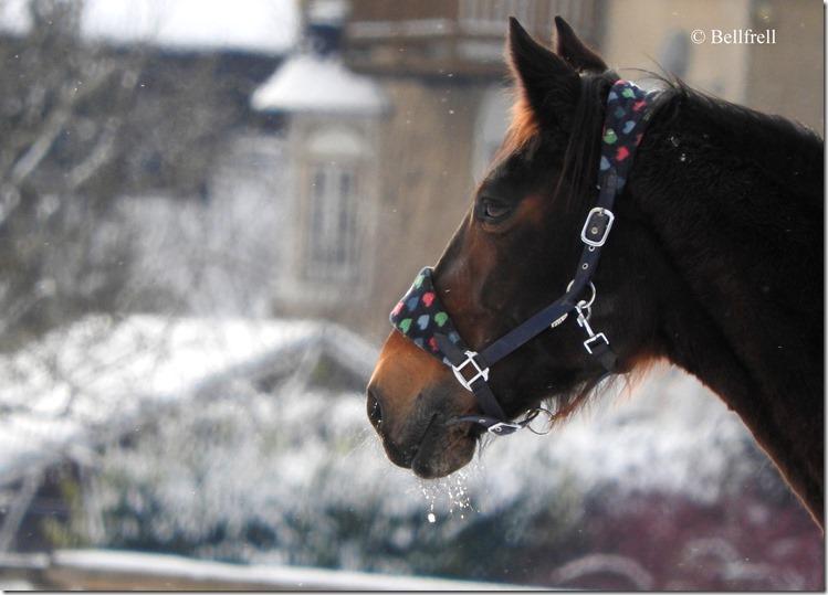 DSCN2751 Pferd 2