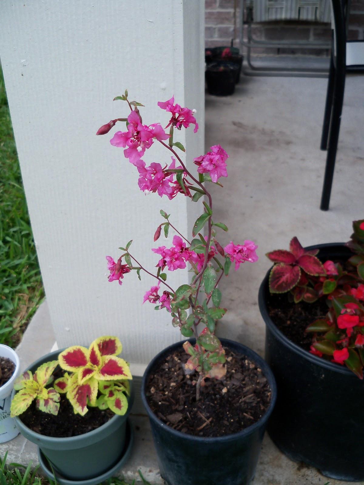 Gardening 2010, Part Two - 101_2950.JPG