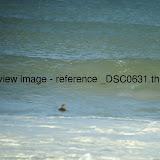 _DSC0631.thumb.jpg