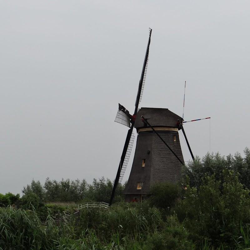 Day_6_Kinderdijk_27.JPG