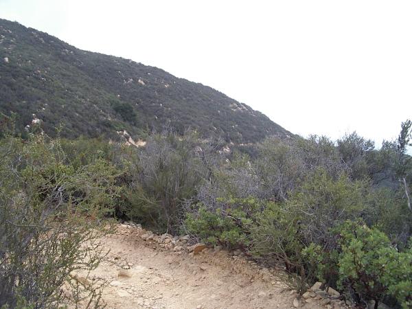 nice, big, easy trail