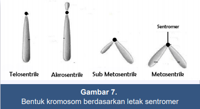 gambar kromosom