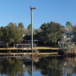 Fowl Marsh from Boat Feb3 2013 019
