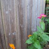 Gardening 2012 - 115_1815.JPG
