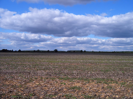 harvested field 2