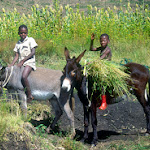 AD05 Two Boys, Donkeys & Sorghum.jpg