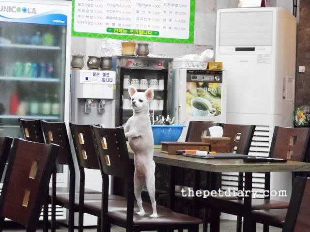 Cute Little White Dog
