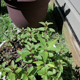 Gardening 2013 - 115_6245.JPG