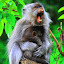 HOLD MY BABY by Rizal Marsa - Animals Other (  )