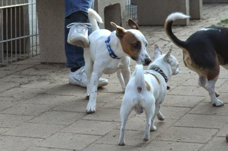 Kleinhundegruppe Mittwoch 17.30 Uhr - DSC_0022.JPG