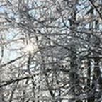 tn_lachaux-2010-12-31.jpg