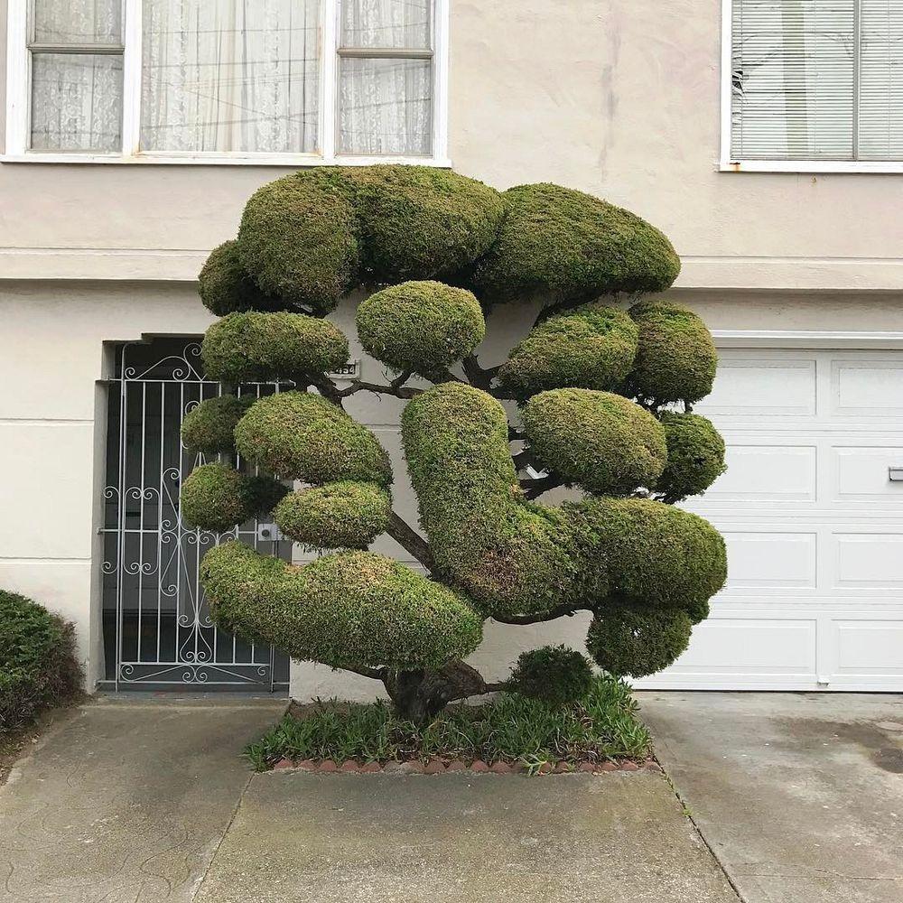 kelsey-mcclellan-topiary-6