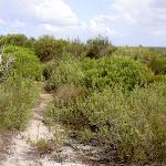 Marley Track through heath (35210)