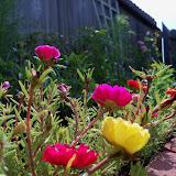 Gardening 2010, Part Two - 101_2391.JPG