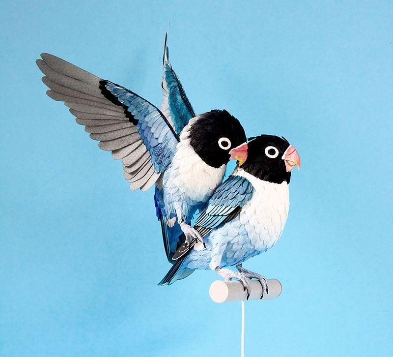 diana-beltran-herrera-birds-23