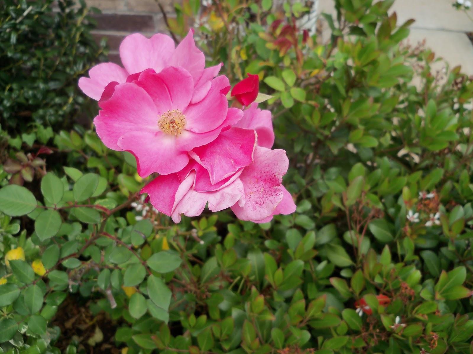 Gardening 2013 - 115_5723.JPG