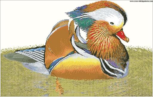 Wood Duck chart