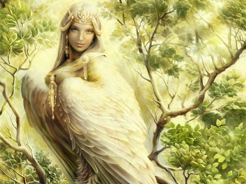 Beauty Bird, Mystery