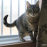 2011_04_01 Bean Cat
