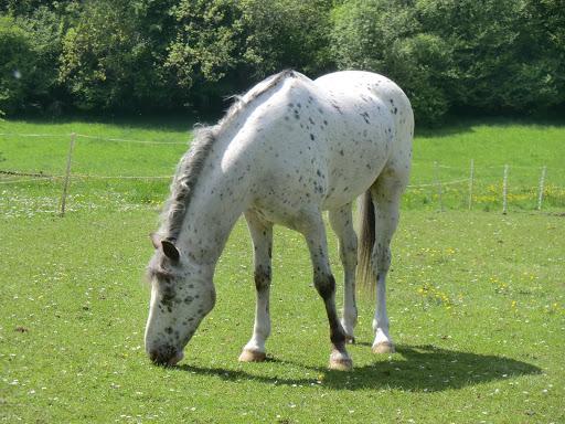 CIMG6763 White horse, Mugswell