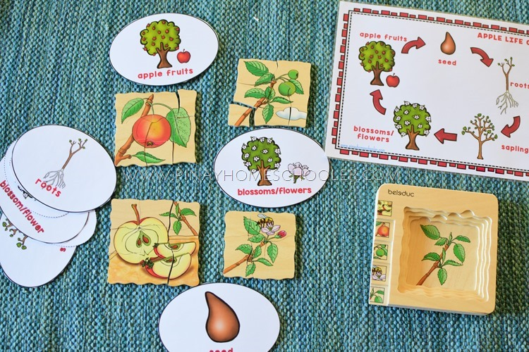 Beleduc Apple Life Cycle Layered Puzzle