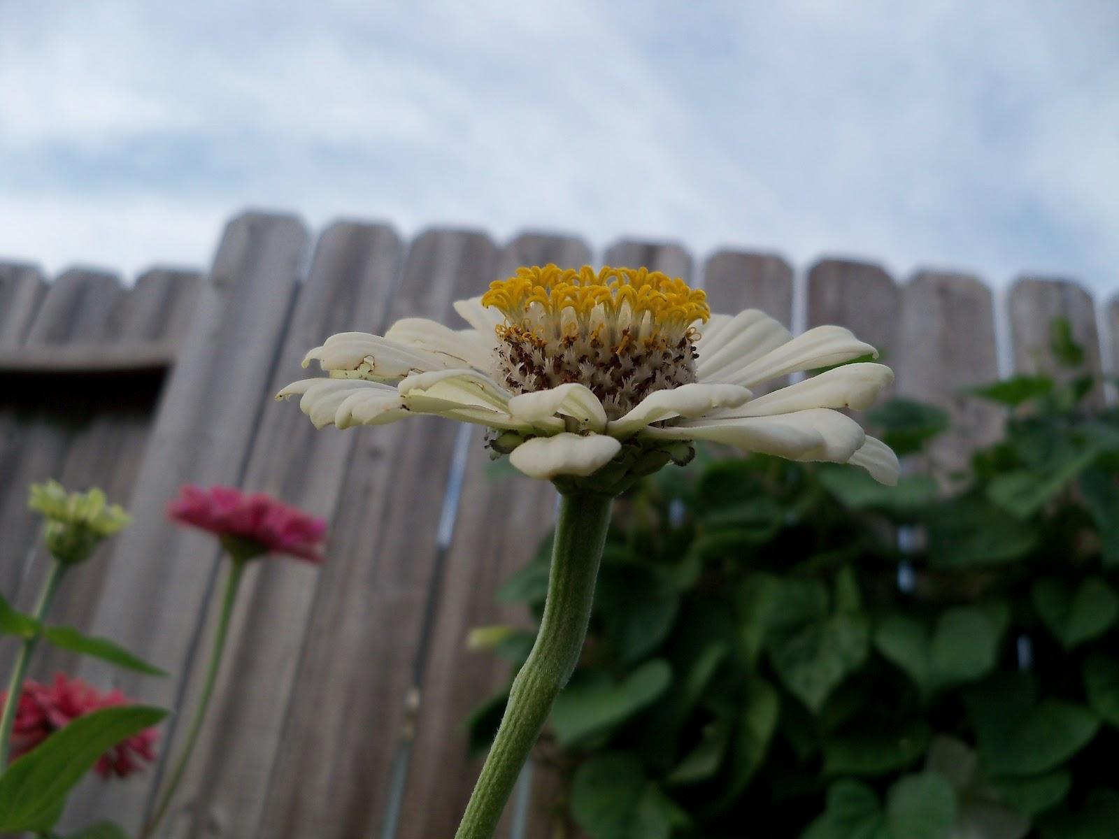 Gardening 2011 - 100_8890.JPG