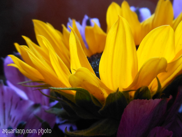 Sunflower Bouquet Photo