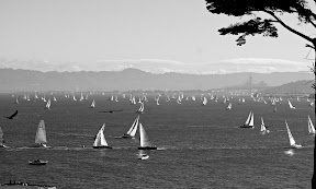Three bridge fiasco fleet sailing San francisco bay