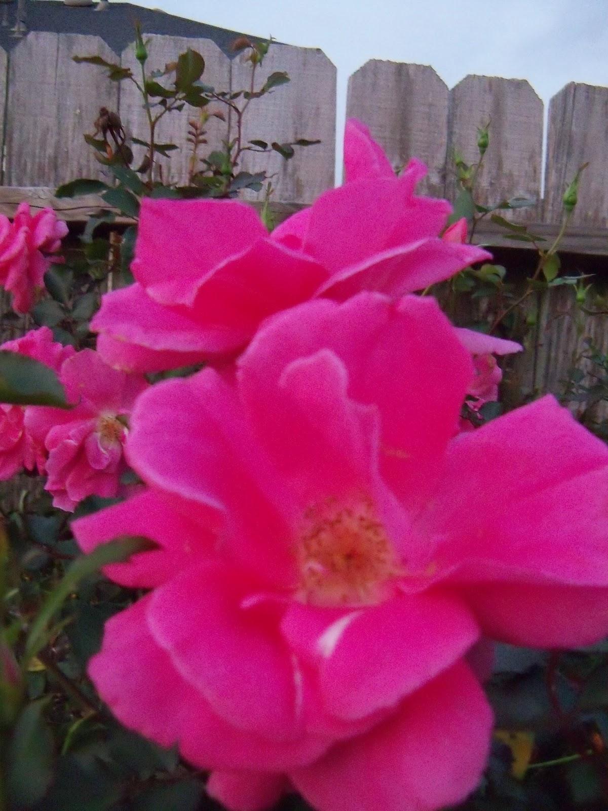 Gardening 2012 - 115_1276.JPG