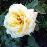 Gardening 2014 - 0409191000.jpg