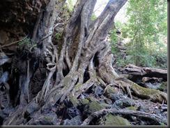 170615 017 Undara Stephenson Cave