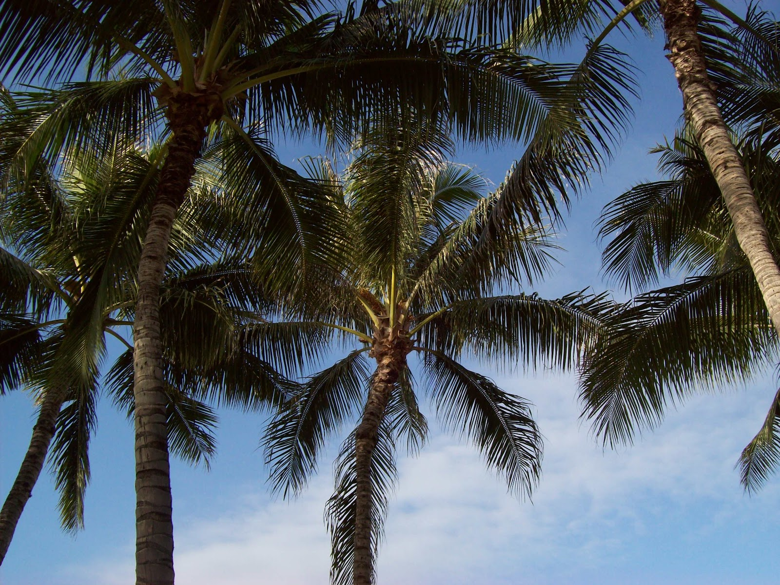 Hawaii Day 2 - 100_6493.JPG