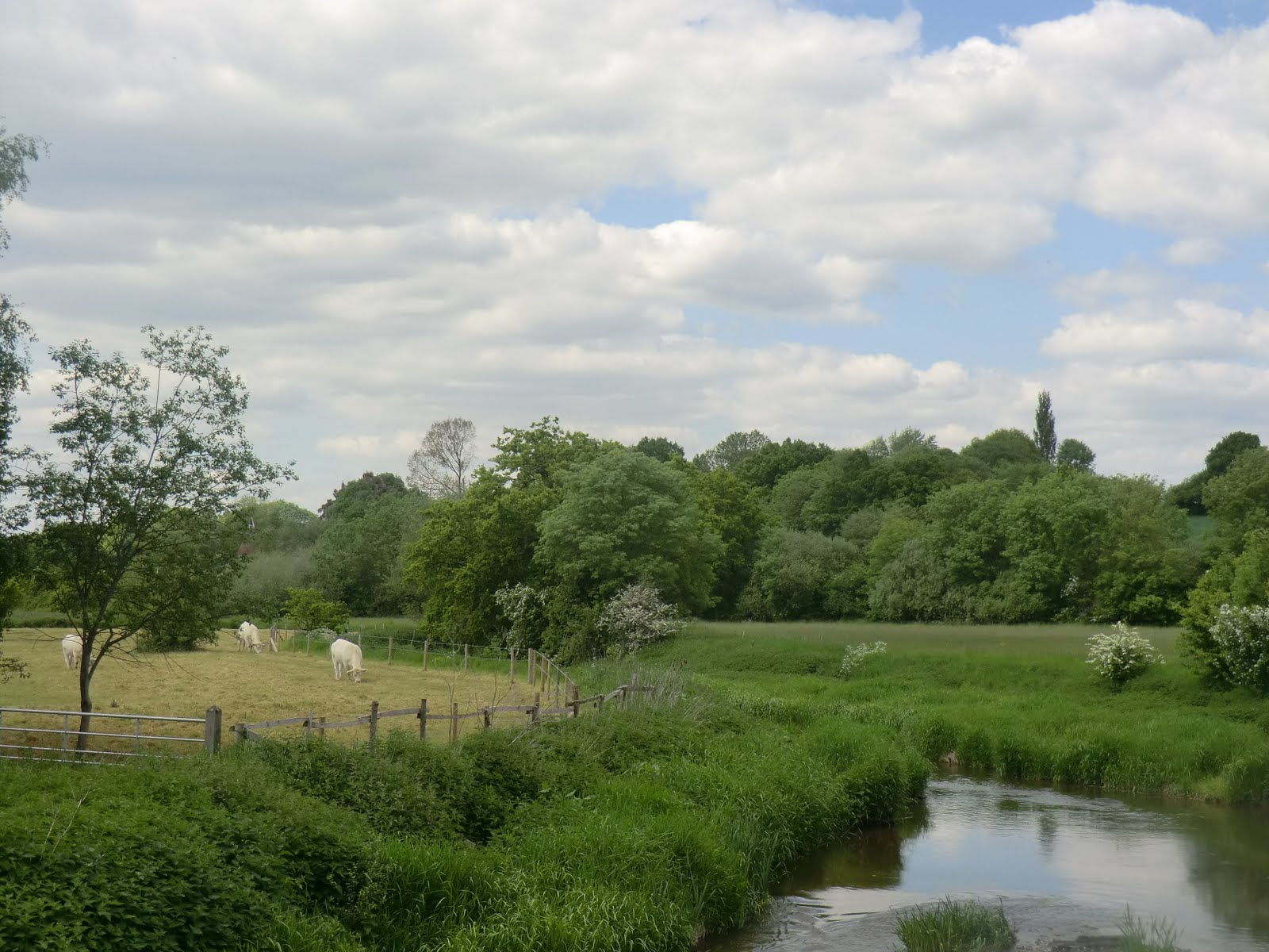 CIMG7119 River Eden near Penshurst