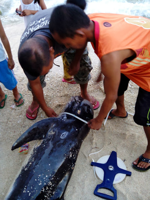 Dolphin - Courtesy - Oslob Municipal Police Station