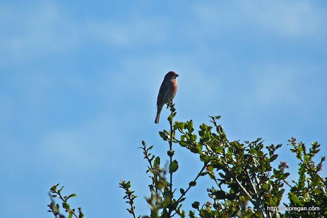 Bird-Festival-313.jpg