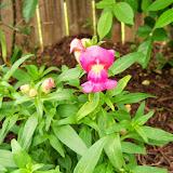 Gardening 2014 - 116_1275.JPG