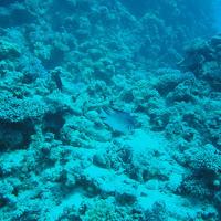 2011-03-27 - plongee port safaga par David et Alexandre - Egypte
