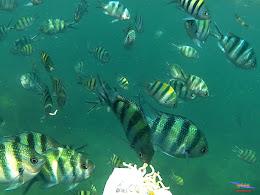 family trip pulau pari 140716 GoPro 45
