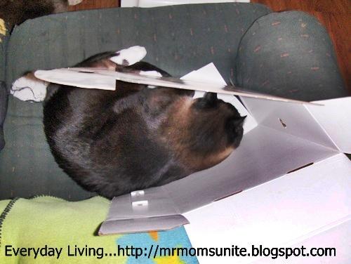 photo of Koko sleeping inside a box