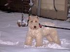 Spencer - winter