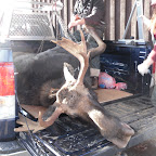 Guided Moose Hunts
