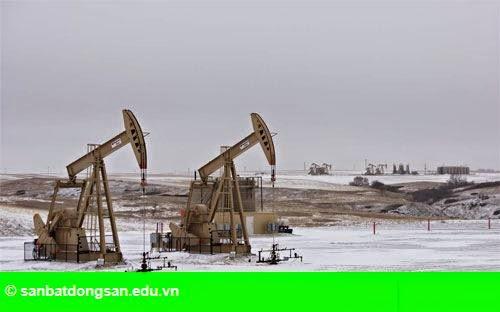 Hình 1: Giá dầu tăng liên tục 4 phiên