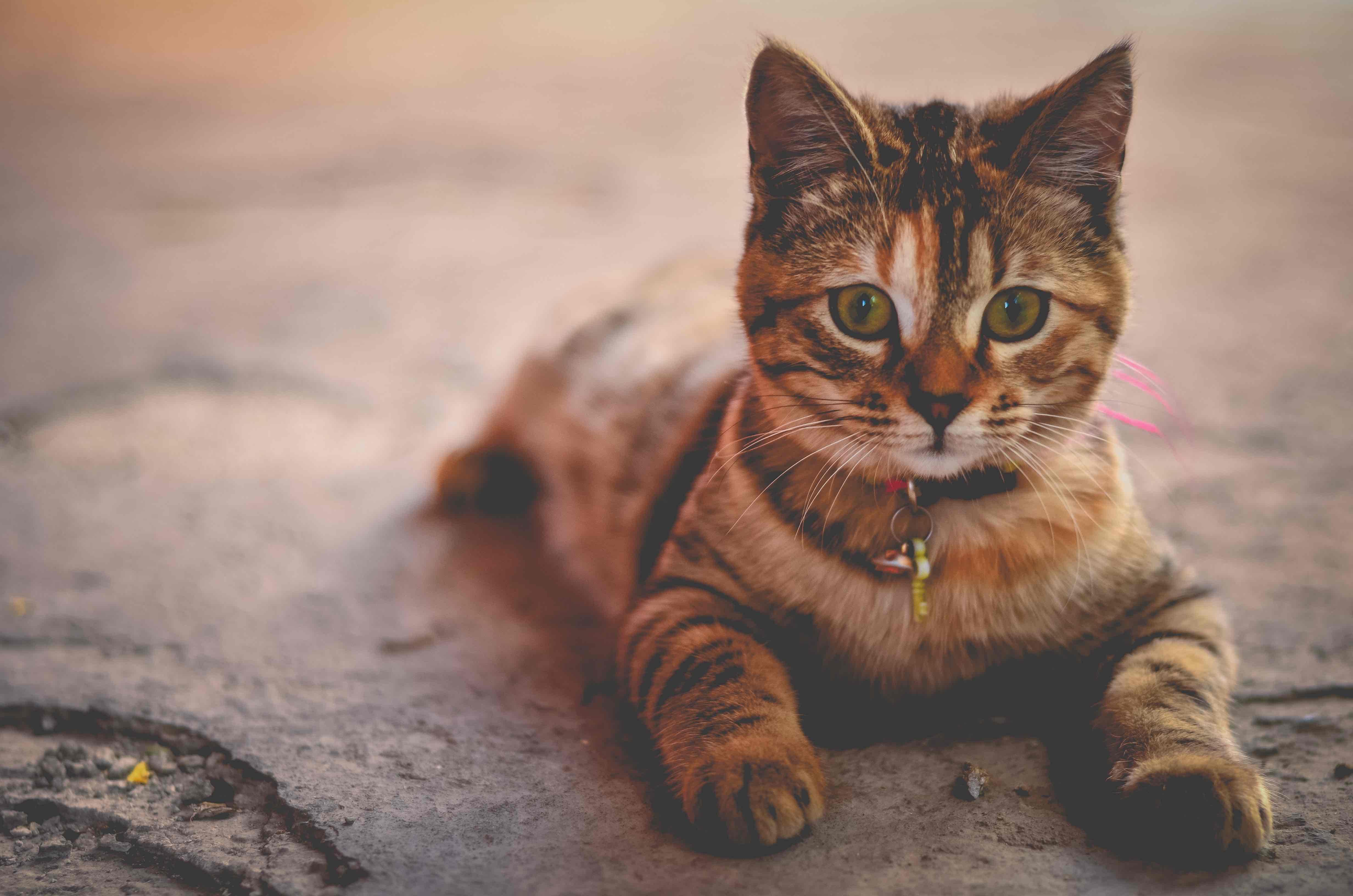 Imagenes muy lindas de gatitos3