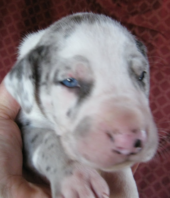 Chief Triplett @ 3 weeks